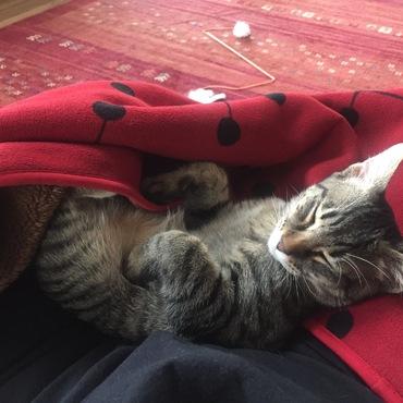 膝で寝ちゃったから…動けないなあ