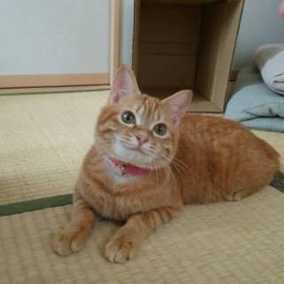 ジャラシ大好き甘えっ子『リノちゃん』