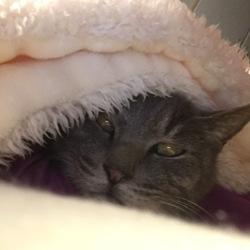 老猫の腎機能低下と加齢臭