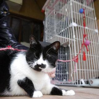 高齢飼主が飼育困難になった目が見えない猫