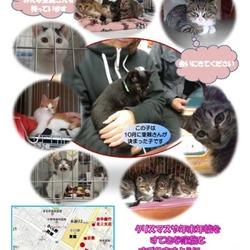 『北のしっぽ』猫譲渡会