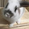 10/28生まれの子ウサギ サムネイル3