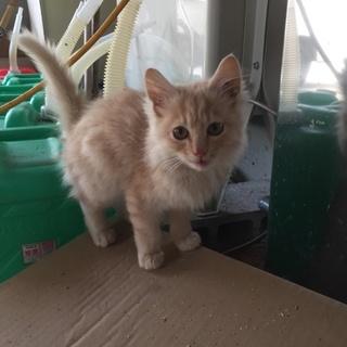 子猫の募集。7~8月生まれです。