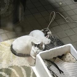 野良猫が子供を産んだようです