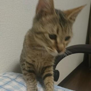 キジトラの猫ちゃん