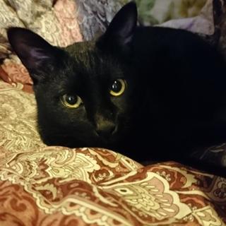 天真爛漫黒猫クウちゃん♂の里親さん募集中