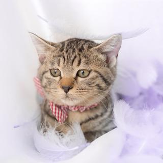 可愛いきじ猫の わかめちゃん ♪