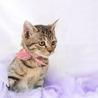 可愛いきじ猫の わかめちゃん ♪ サムネイル2