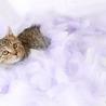 可愛いきじ猫の わかめちゃん ♪ サムネイル3