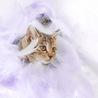 可愛いきじ猫の わかめちゃん ♪ サムネイル5