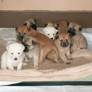 11月10日生まれの9匹兄弟♀3♂6