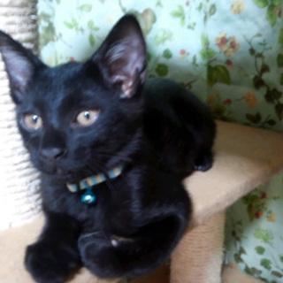 黒黒スリーのクマゴローです
