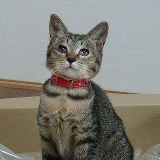 和猫のゆめかちゃん(ハンデあり)
