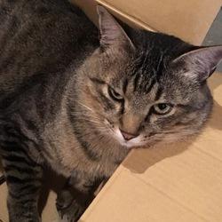 猫はサンタクロースの夢を見るか?