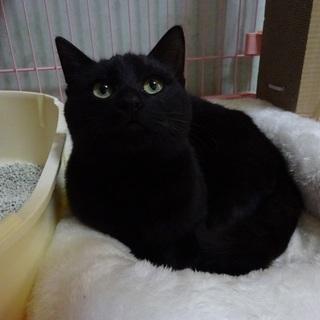 黒猫の風神君 とても甘えんぼうです