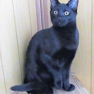 とても人懐こい元気な黒猫ロク君