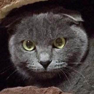 なめらかなグレーの被毛と魅惑の瞳ポトフちゃん