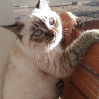 子猫(1匹)の里親を探しています