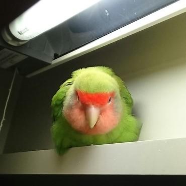 鳥も 溶ける 季節 です