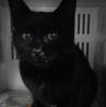 里親様を待っています。成猫 性別不明 黒