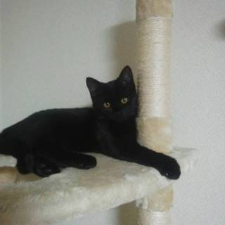 健康優良児!黒猫の女の子