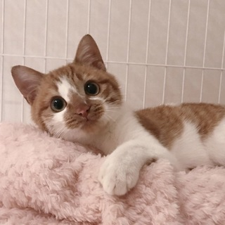 猫好き。まんまるふわふわなガティーくん