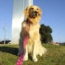 犬の通行禁止①