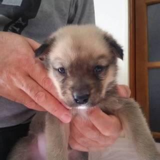 可愛い子犬たちの家族になって下さい!