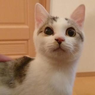 ツンデレデレ猫☆猫に慣れてる方