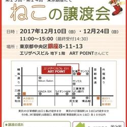 12月24日(日)第24回★ミャオ!ねこのおうち譲渡会★銀座8丁目会場