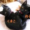 うりふたつの仲良し黒猫姉妹♪ 月子ちゃん
