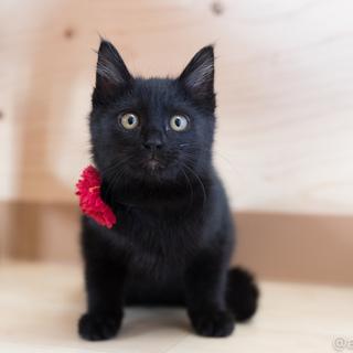 元気で懐こい黒猫の はちお君 ♪