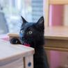 元気で懐こい黒猫の はちお君 ♪ サムネイル2
