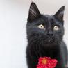 元気で懐こい黒猫の はちお君 ♪ サムネイル3