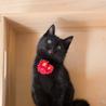 元気で懐こい黒猫の はちお君 ♪ サムネイル4