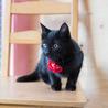 元気で懐こい黒猫の はちお君 ♪ サムネイル5