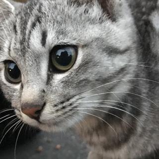 可愛い子猫(,,・ω・,,) 里親募集