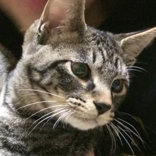 生後4ヶ月☆人懐っこい子猫です☆