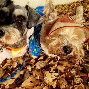 秋を満喫ワン(^_-)-☆めぐっチョ~、枯葉は食べ物じゃないよ!