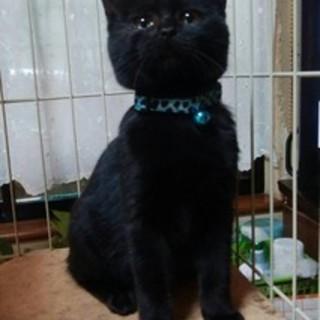 6ヵ月!黒猫ククちゃん