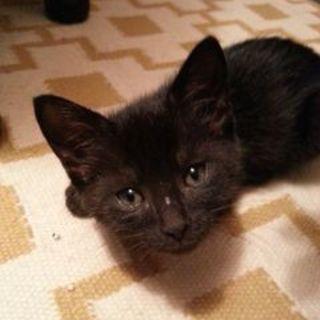 2ヶ月 黒猫ピーちゃん