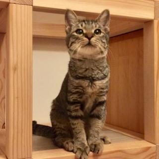 毎日が予約制譲渡相談会 生後3-8カ月 大人猫も