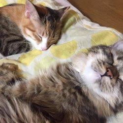 子猫の成長日記12月