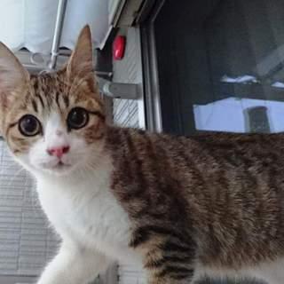 ★キジ白 美猫な子猫ちゃん★