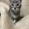 6匹!生後2ヶ月半と3ヶ月の子猫達です。