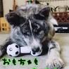 幼さが残る秋田犬『不二子』ちゃん サムネイル2
