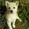 白いふわふわな女の子ポーちゃん サムネイル2