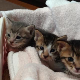★ とっても小さい 離乳中の3兄妹 ★