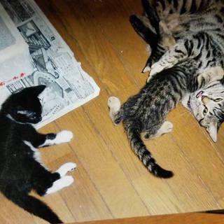 飼育困難のため!緊急里親募集の親子猫!
