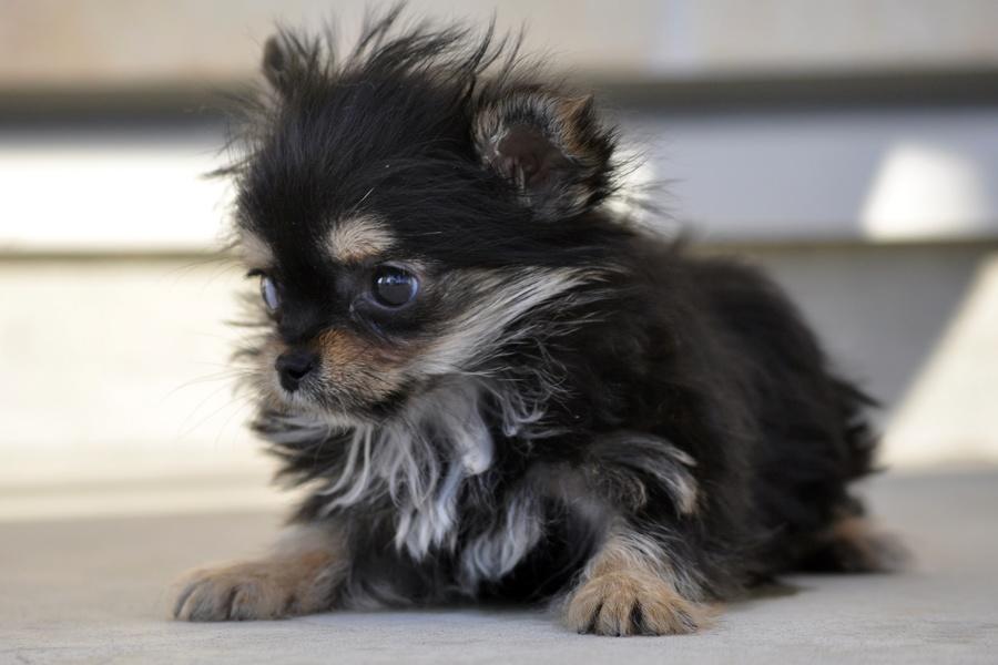 小型 犬 里親 募集 小型犬の里親募集情報 :: ペットのおうち【月間利用者150万人!】